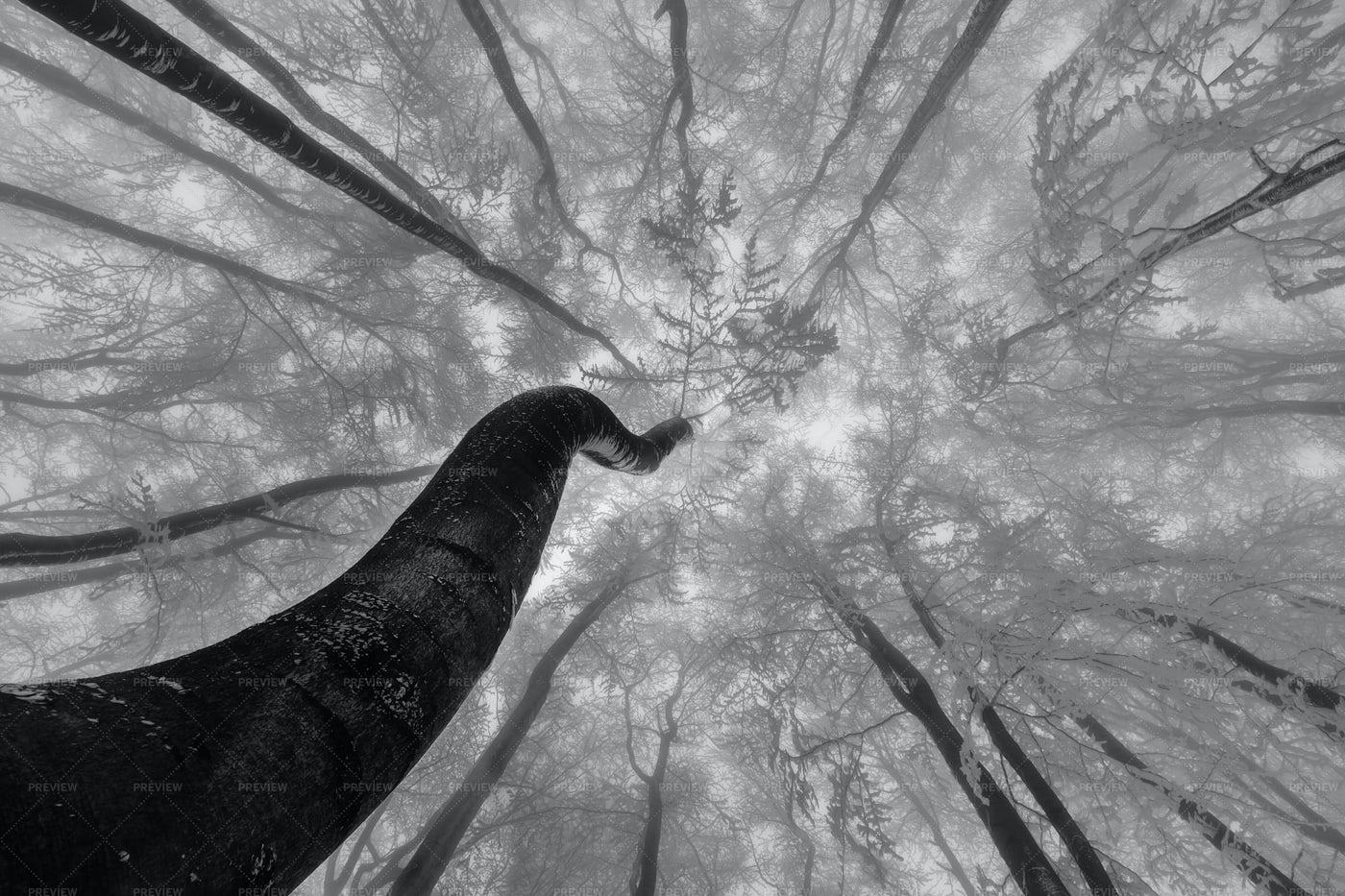 Winter Tree Crown: Stock Photos