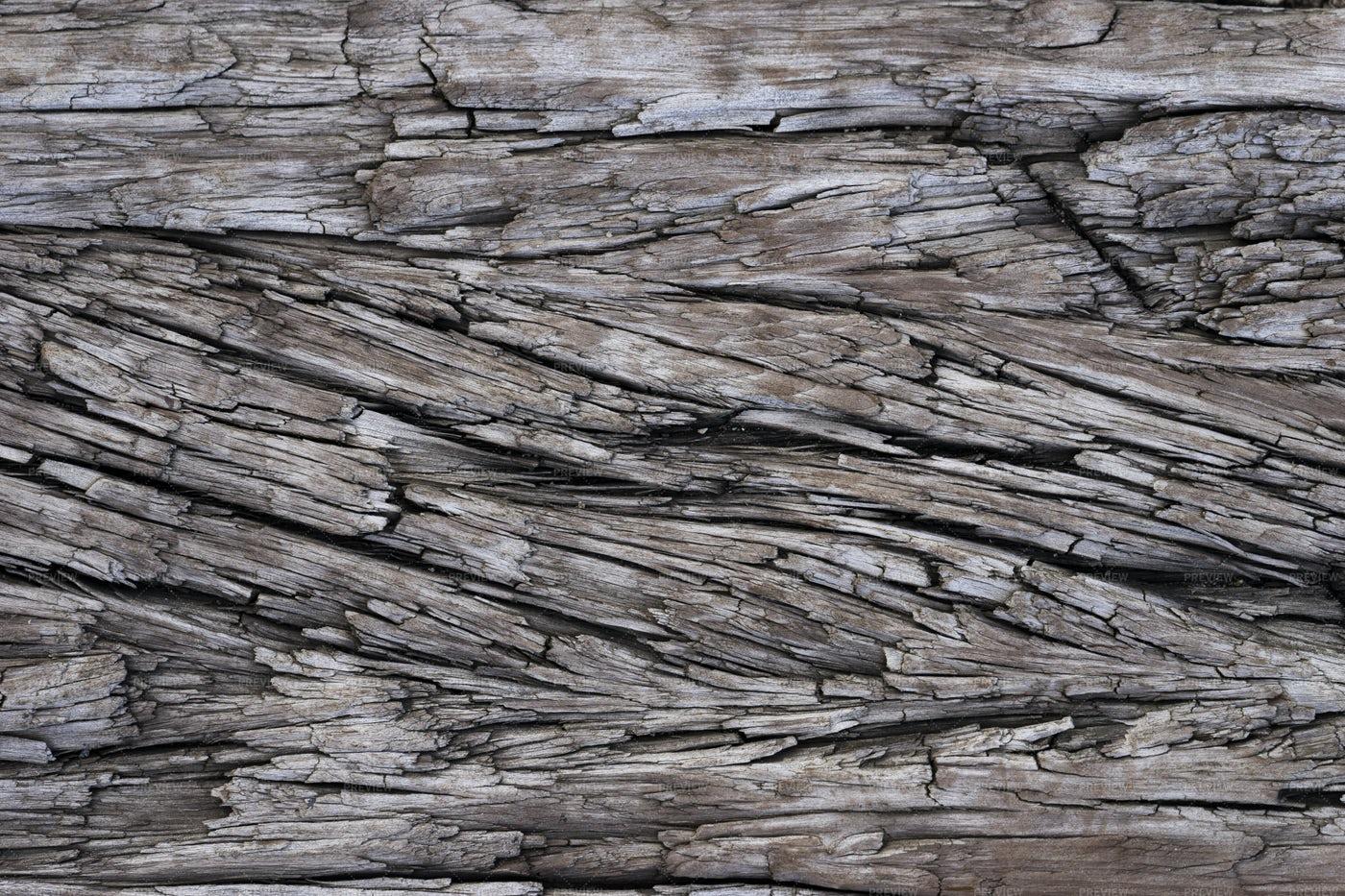 Old Tree Trunk Textures: Stock Photos