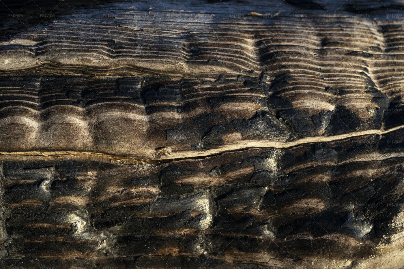Charred Wood: Stock Photos