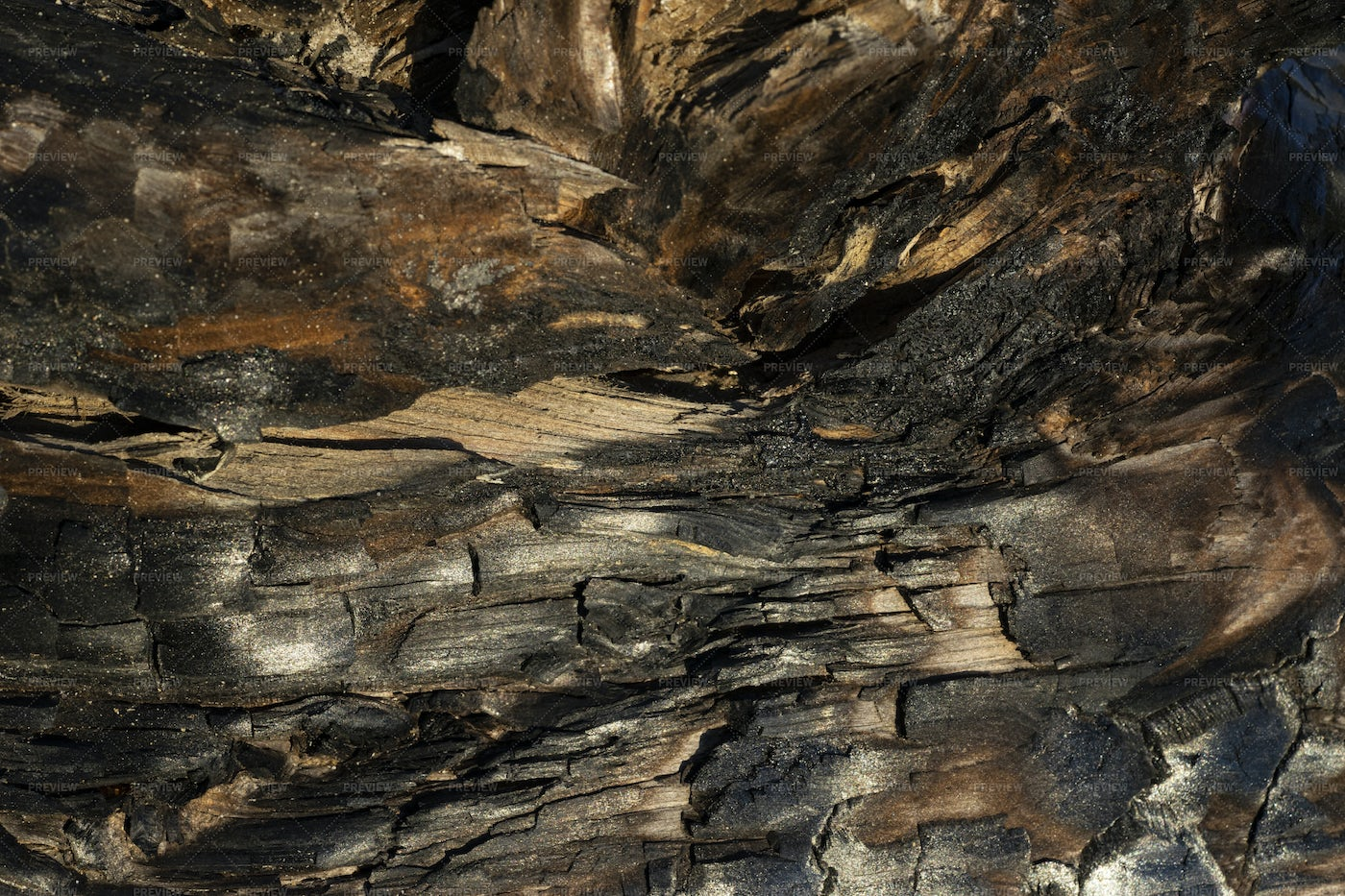 Complex Charred Wood Textures: Stock Photos