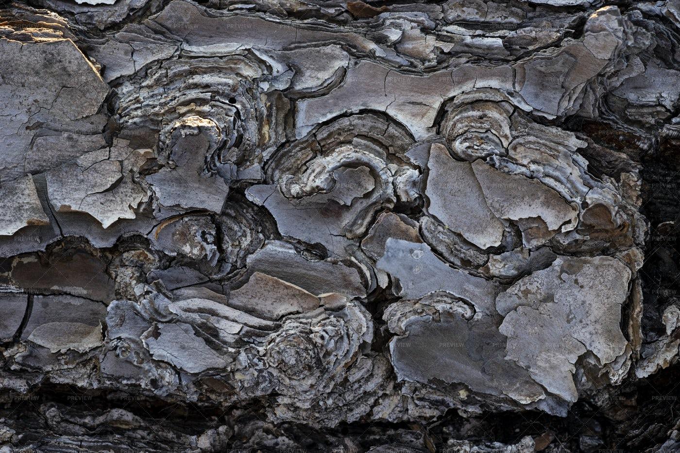 Pine Bark Textures: Stock Photos