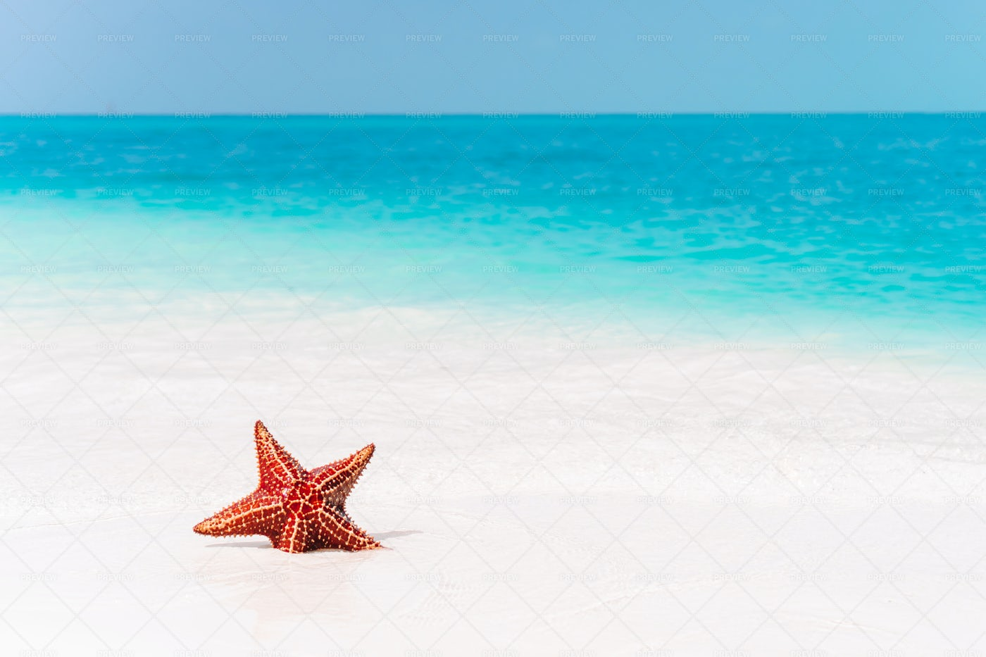 Red Starfish: Stock Photos