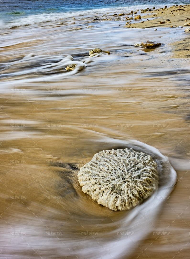 Coral Stone On The Beach: Stock Photos
