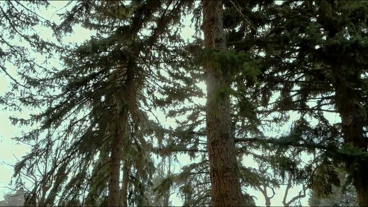 Forest Walk Through: Stock Video