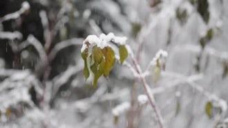 Spring Snowfall: Stock Video