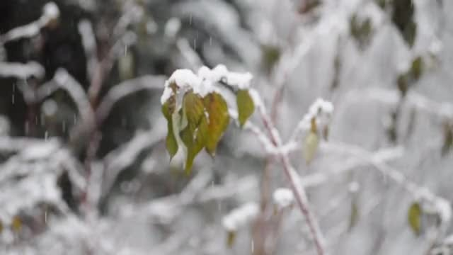 Spring Snowfall: Stock Video