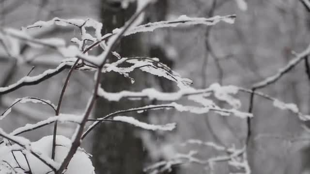 Snowfall In The Forest: Stock Video