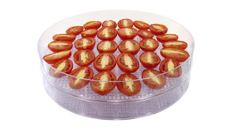 Drying Tomato Vegetables: Stock Video