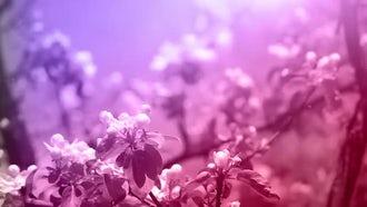 Blossoming Spring Garden: Stock Video
