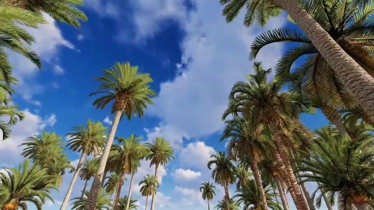 Palm Tree Forest: Stock Motion Graphics