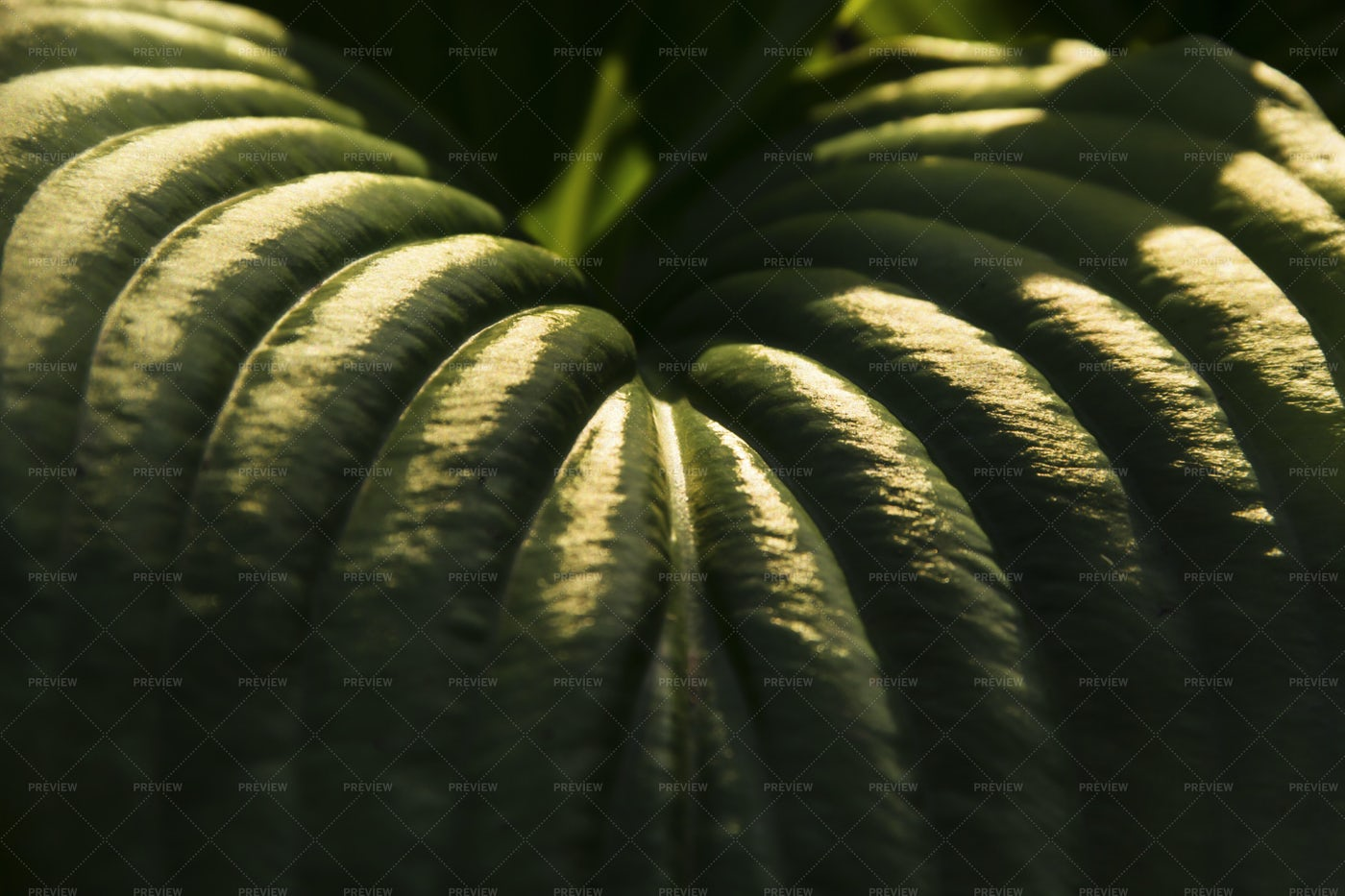 Palm Leaf In Sunlight: Stock Photos