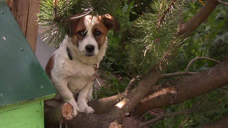 Dog Sitting On A Tree : Stock Video