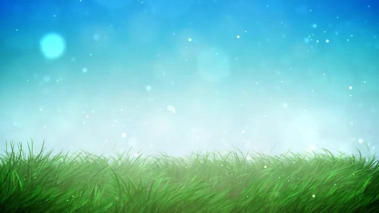 Sunny Grass Loop: Motion Graphics