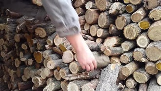 Stocking Up On Firewood: Stock Video