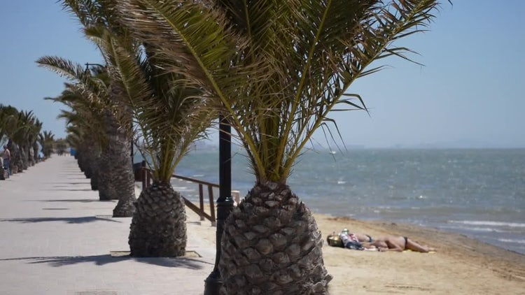 Palm Trees And Sunbathing Man: Stock Video
