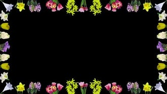 Easter Flowers Opening Frame : Stock Video