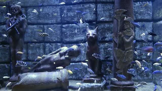 Egyptian Statues And Fish In Aquarium: Stock Video