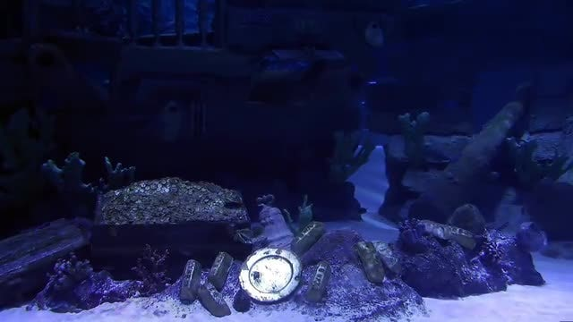 Treasures In Water And Fish Swimming: Stock Video