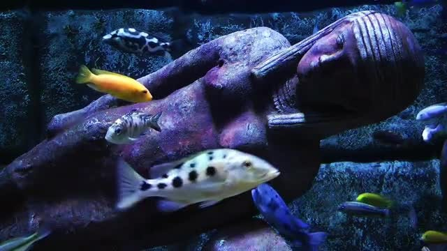 Egypt Woman Statue And Fish In Aquarium: Stock Video