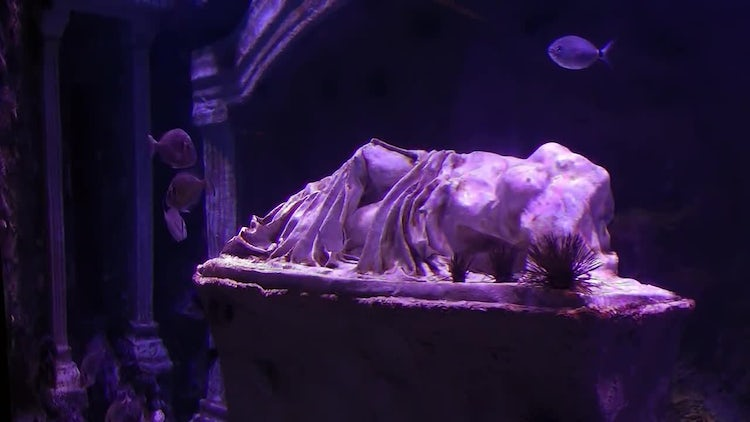 Roman Statue Fishes In Aquarium: Stock Video