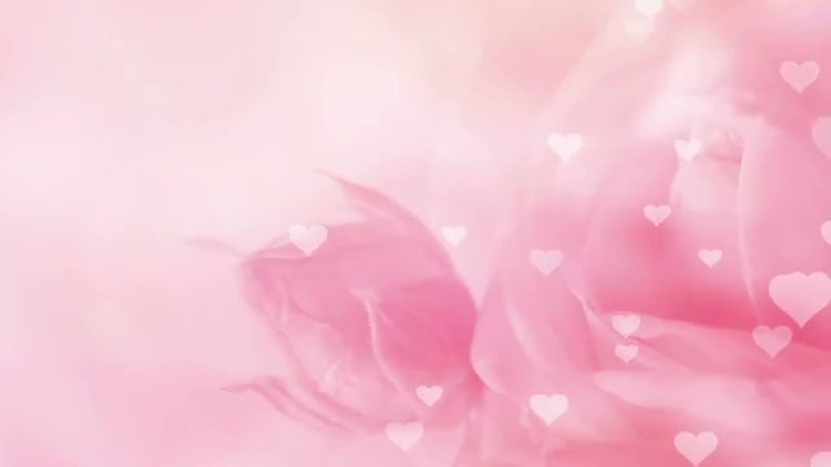 Pink Rose And Hearts Background: Stock Motion Graphics