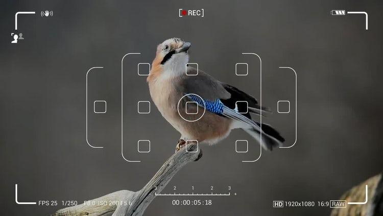 Camera Screen Recordings-09: Motion Graphics