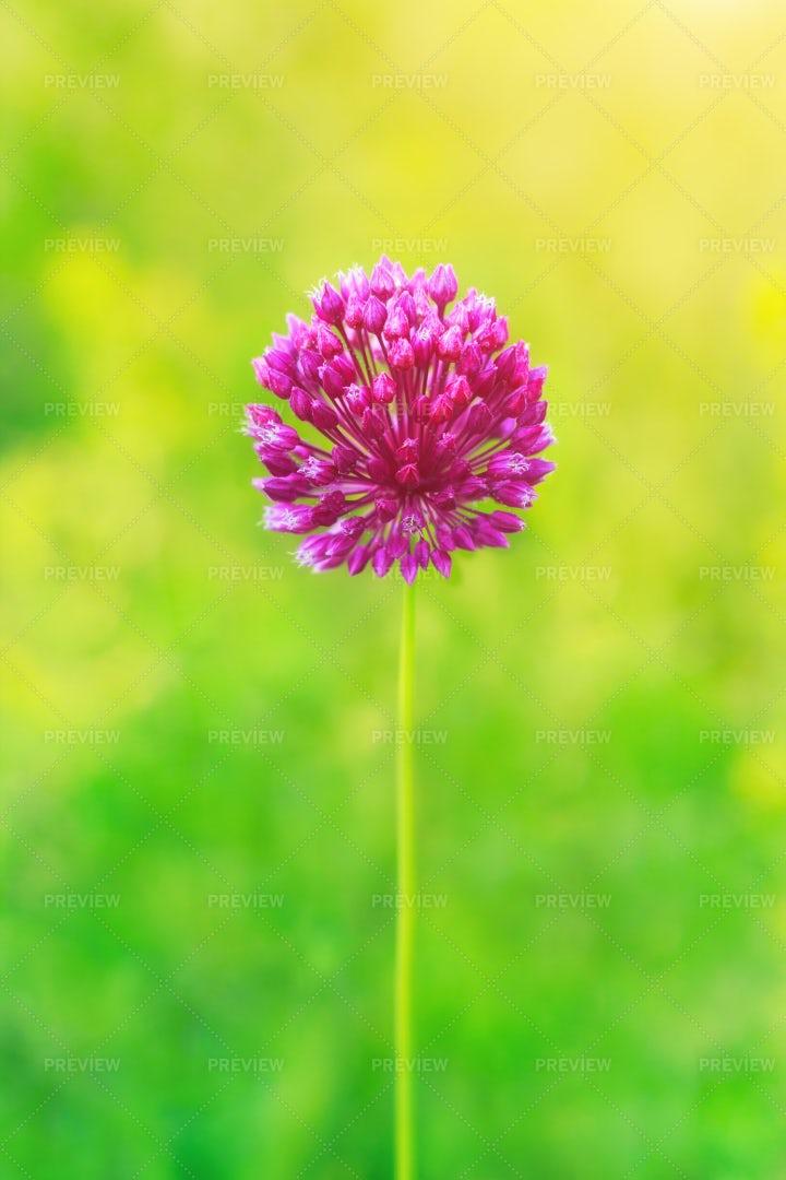 Pink Flower: Stock Photos