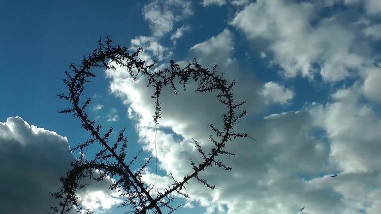 Heart Shape Branch Birds Fly: Stock Video