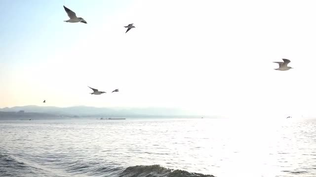 Seagulls Fly Near Boat: Stock Video