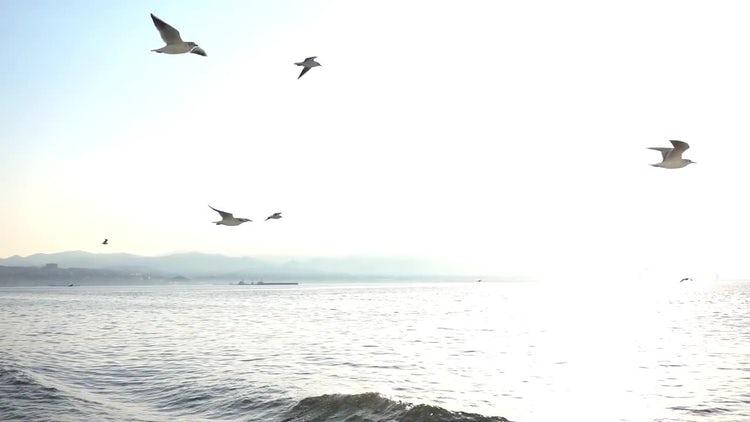 Seagulls Fly Near Boat: Stock Video