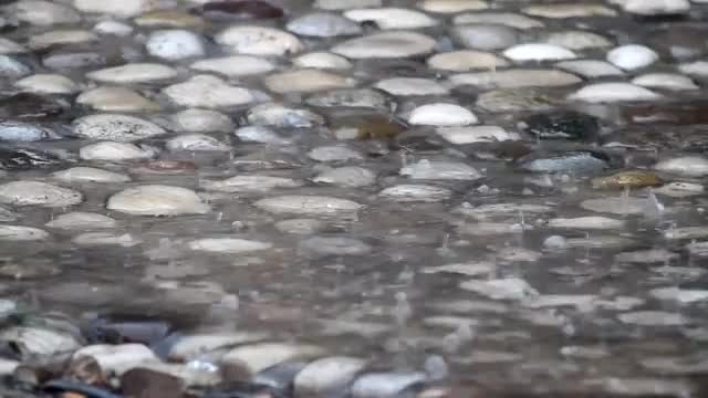 Rain Drops On Pebbles: Stock Video