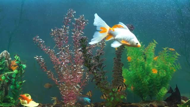 Tropical Fish In Aquarium: Stock Video