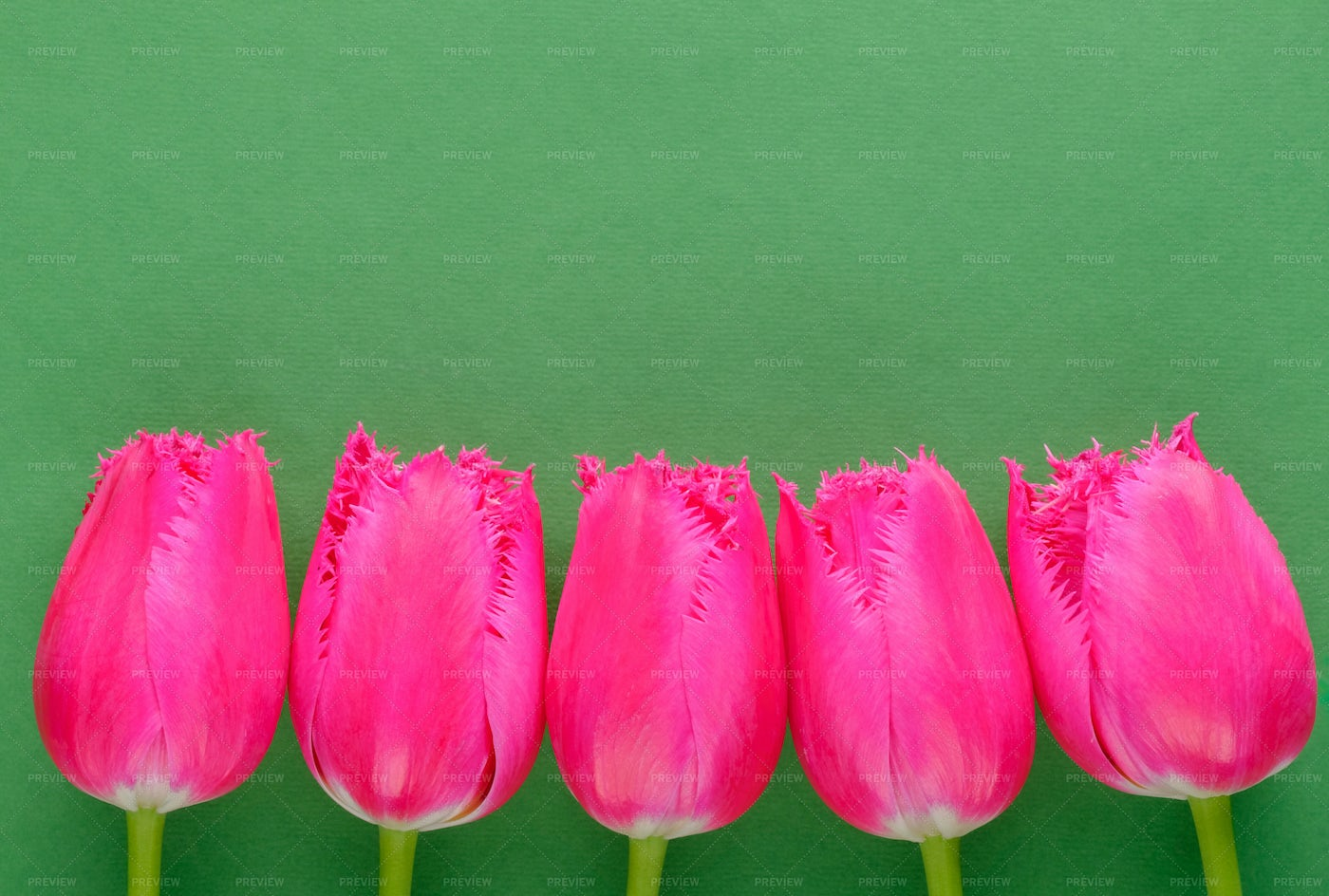 Pink Tulips On Green: Stock Photos