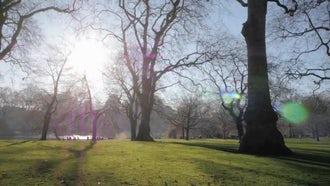 Walking In Green London Park: Stock Video