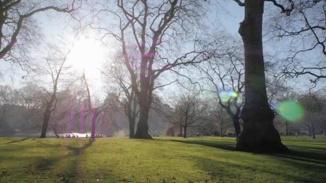 Walking In Green London Park: Stock Video