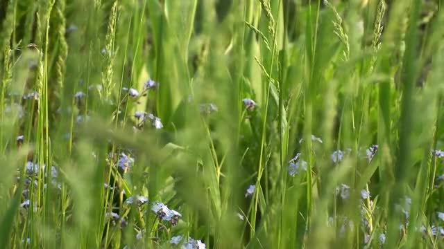 Green Grass And Flowers Background: Stock Video