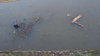 Trash In Polluted Canal: Stock Video