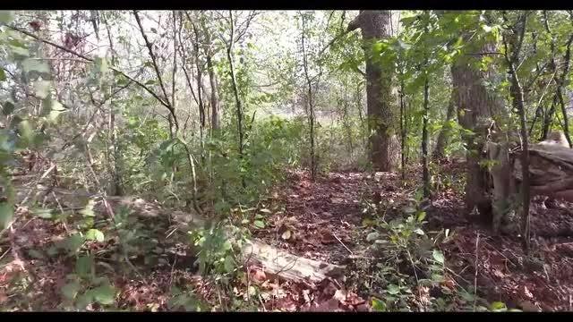 Walking Through the Bush POV: Stock Video