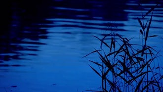 Grass Reeds Silhouette On Water: Stock Footage