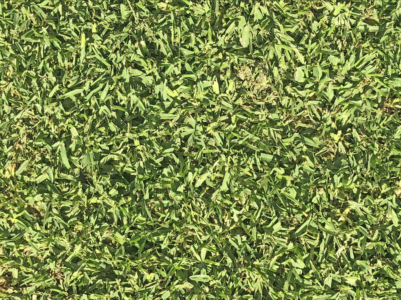 Lawn Texture: Stock Photos