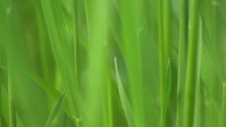 Green Grass Macro Background Video: Stock Video