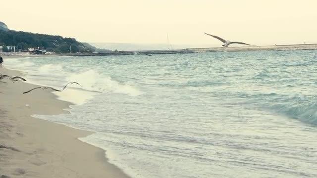 Seagulls On Beach: Stock Video