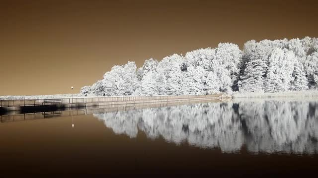 Infrared Reflection of Trees: Stock Video