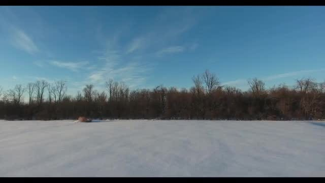 Snowy Field, Forest And Sky: Stock Video