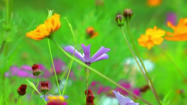 Colorful Heavenly Flowers Pack: Stock Video