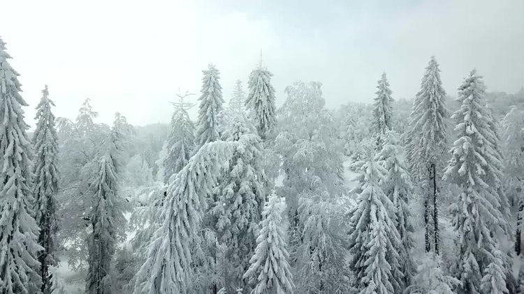 Winter Aerial: Stock Video