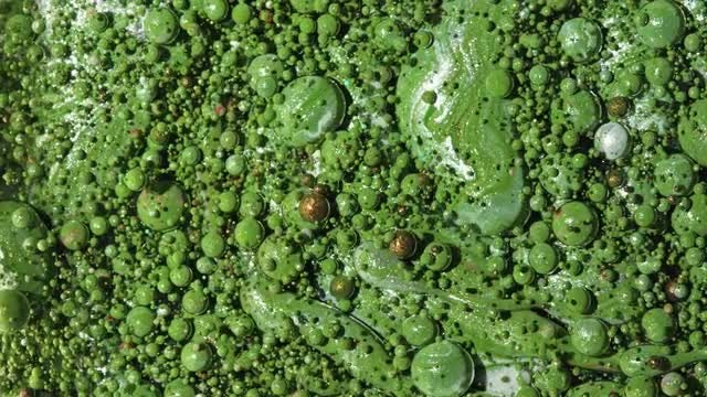 Green Paint Oil Bubbles: Stock Video