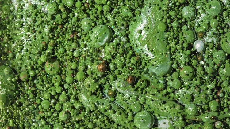 Green Paint Oil Bubbles: Stock Video