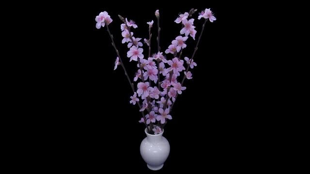 Cherry Willow Branches Blooming: Stock Video