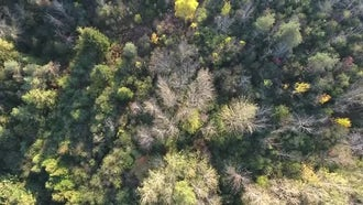 Forest Canopy Aerial View: Stock Video